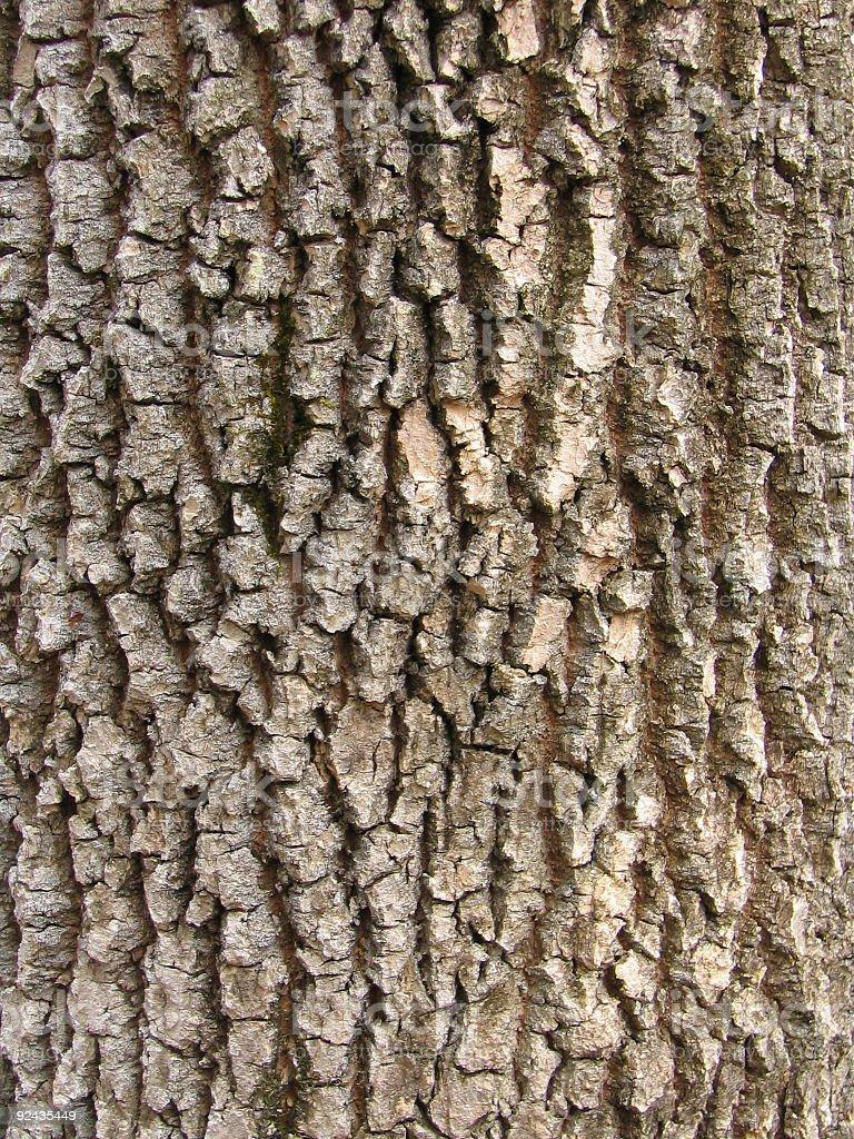 Abstract - Bark of a tree royalty-free stock photo
