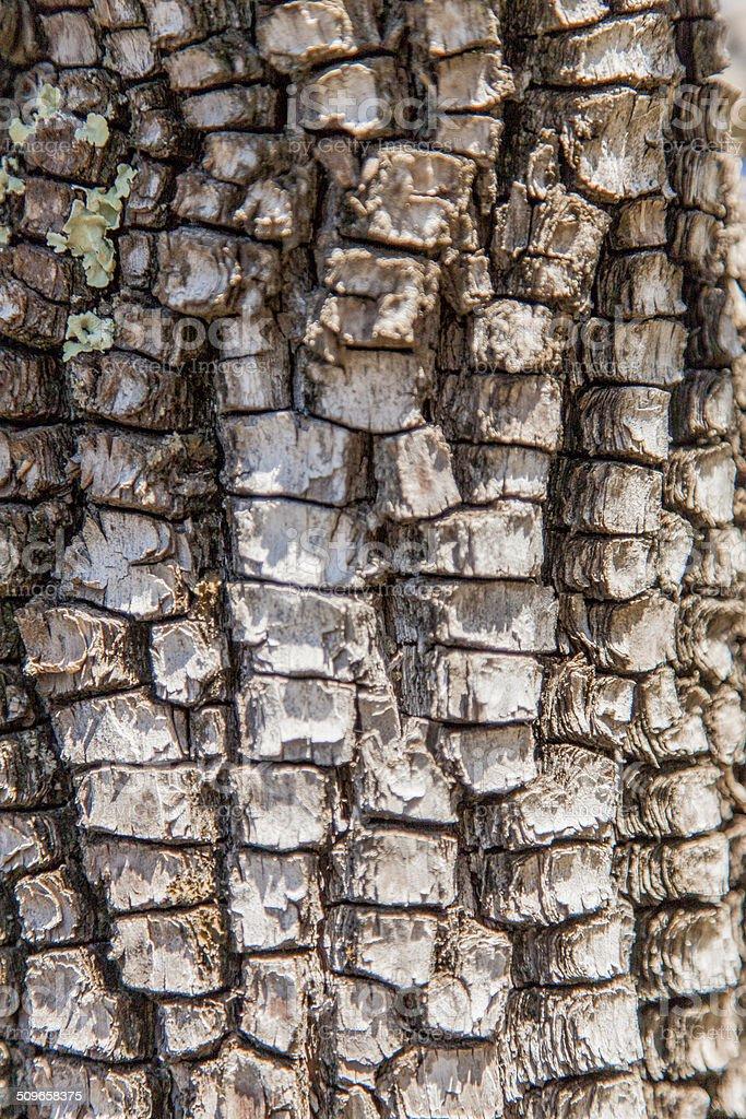 Abstract Bark stock photo