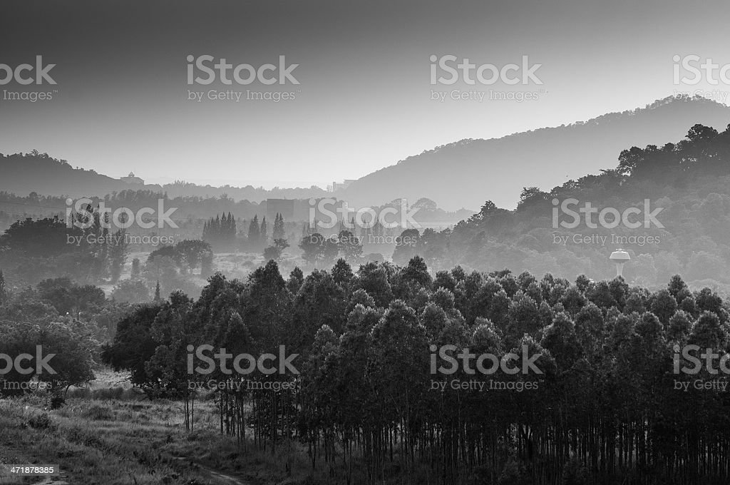 abstract black and white forest with mountain royalty-free stock photo