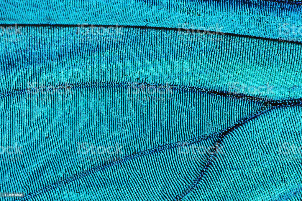 Abstract blue texture of shiny butterfly wing stock photo