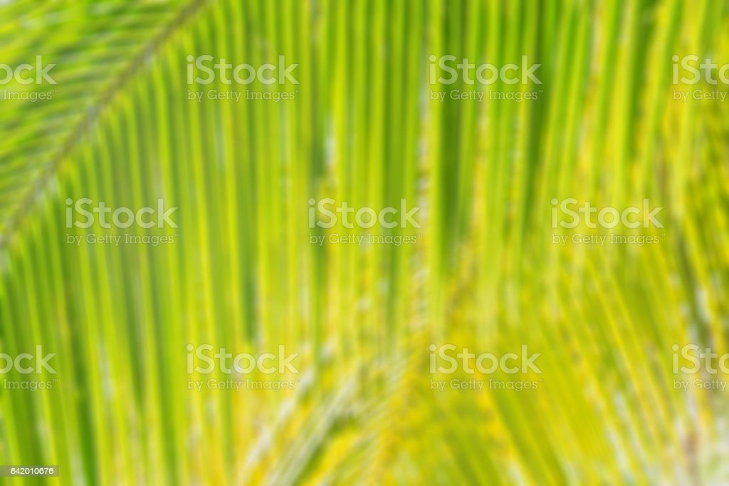 Abstract blur bokeh background of coconut palm leaf stock photo