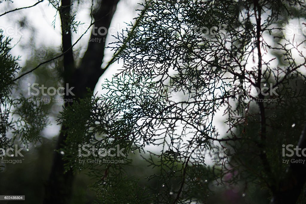 Abstract Blur of dark forrest stock photo