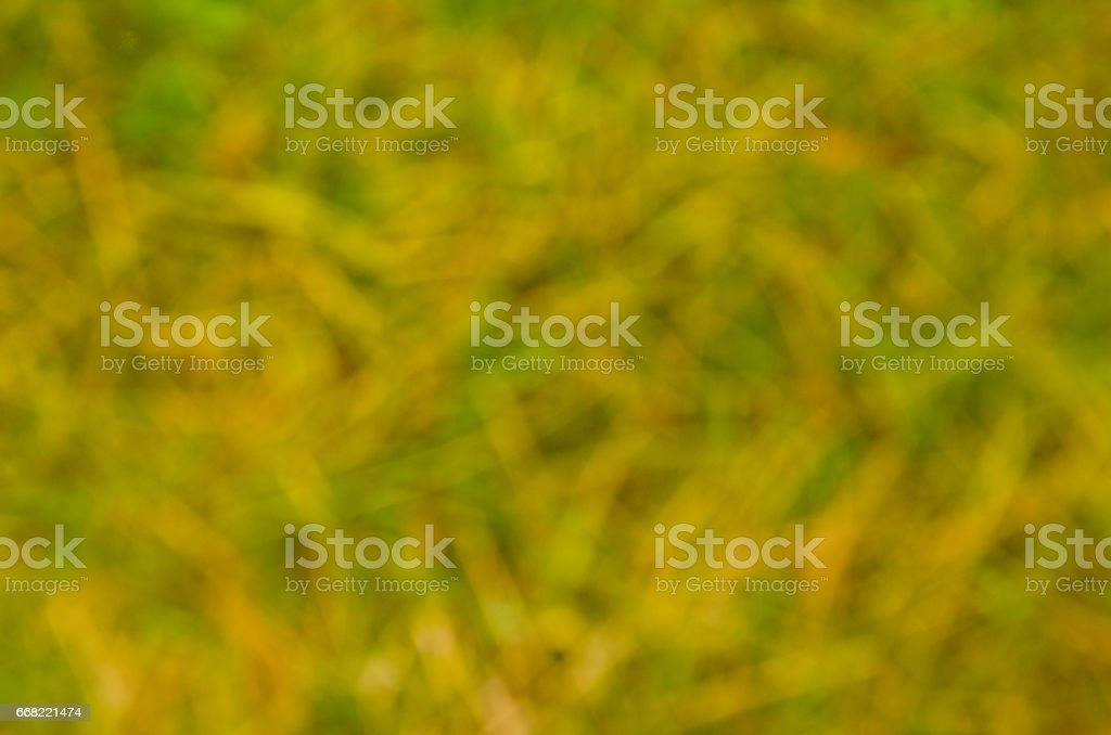 Abstract blured out of focus green background stock photo