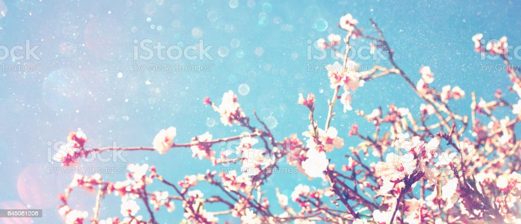 Abstract blurred banner of spring cherry tree stock photo