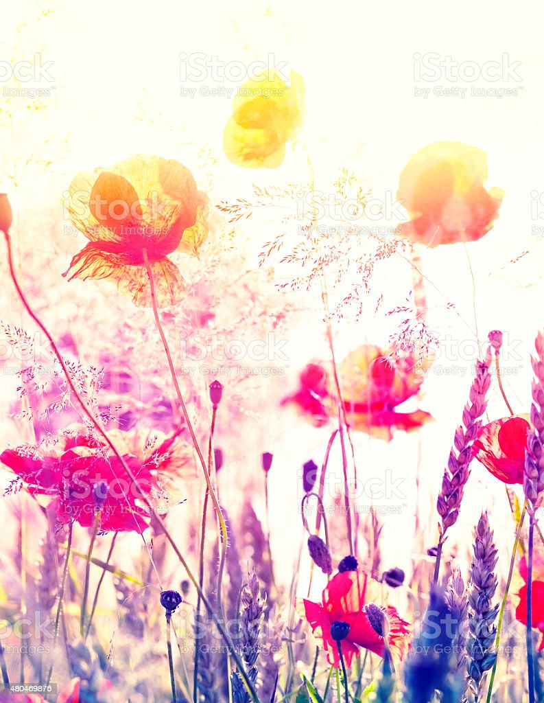 Abstract blurred nature background, summer meadow at sunrise. stock photo