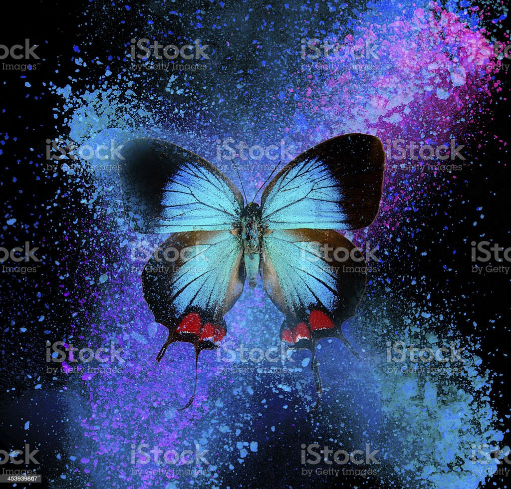 Abstract butterfly royalty-free stock photo