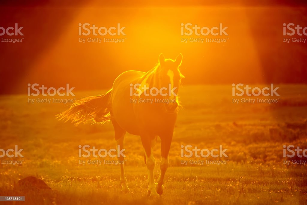 abstract camera effect of a horse on a farmland stock photo