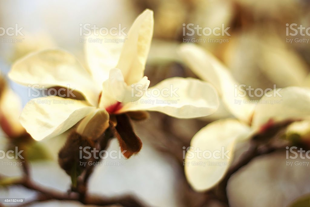 Abstract close up of a branch with flowers royalty-free stock photo