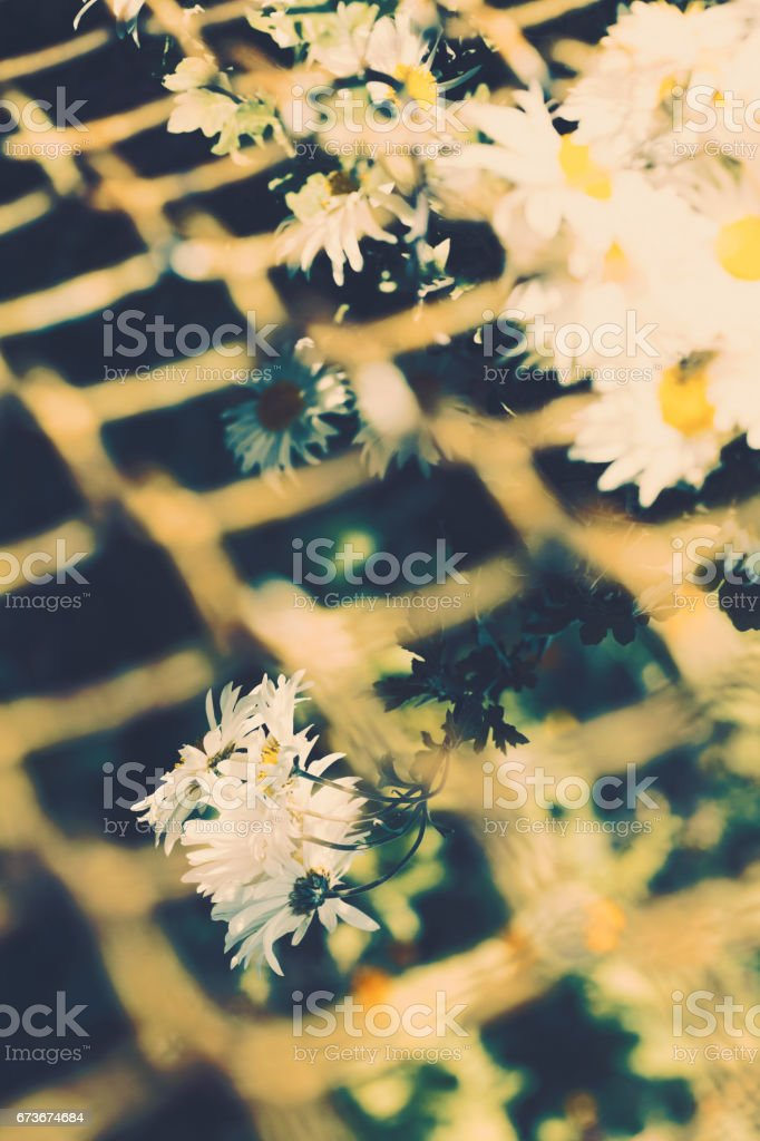 Abstract close-up of daisy flowers stock photo