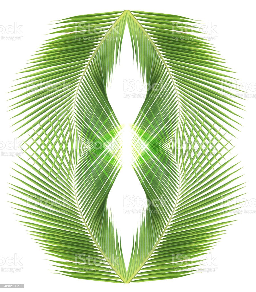 Abstract coconut leaves background stock photo