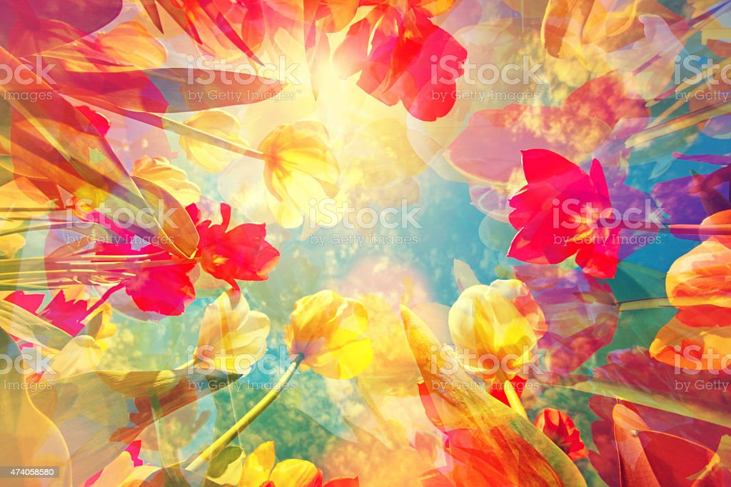 Abstract colored background with beautiful flowers, tulips and soft hues stock photo