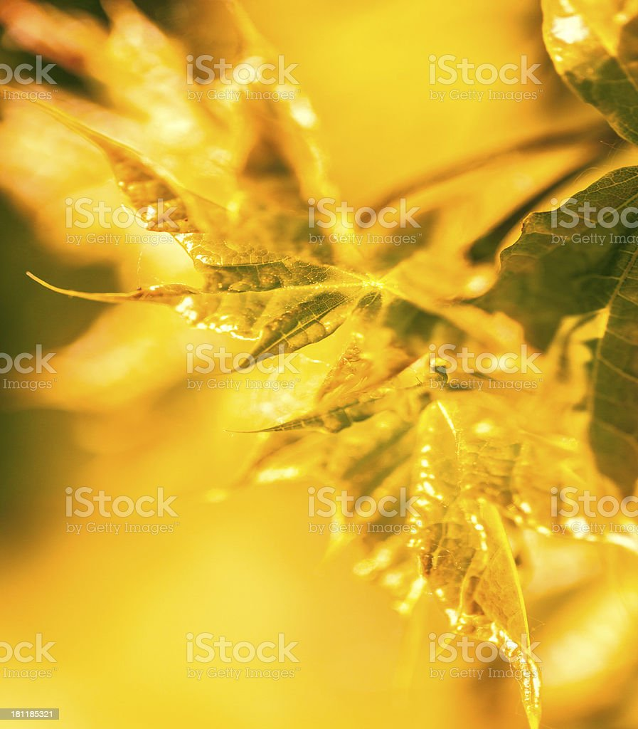 Abstract colorfu autumnl leaves used as background royalty-free stock photo
