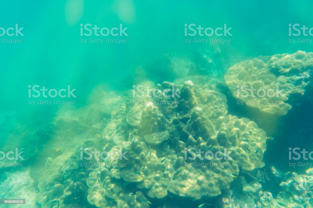 abstract coral and underwater view on sun light stock photo