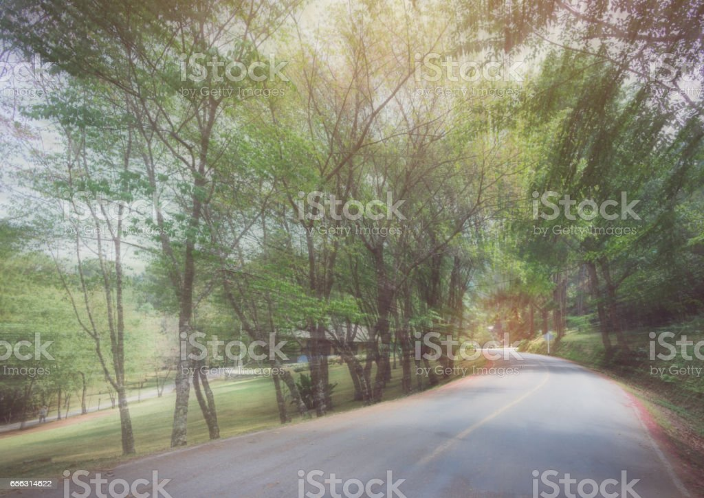 abstract curve asphalt road with tree sideway in forest. stock photo
