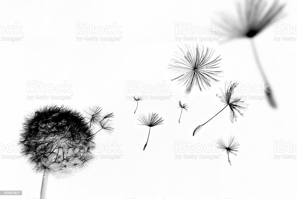Abstract dandelion royalty-free stock photo