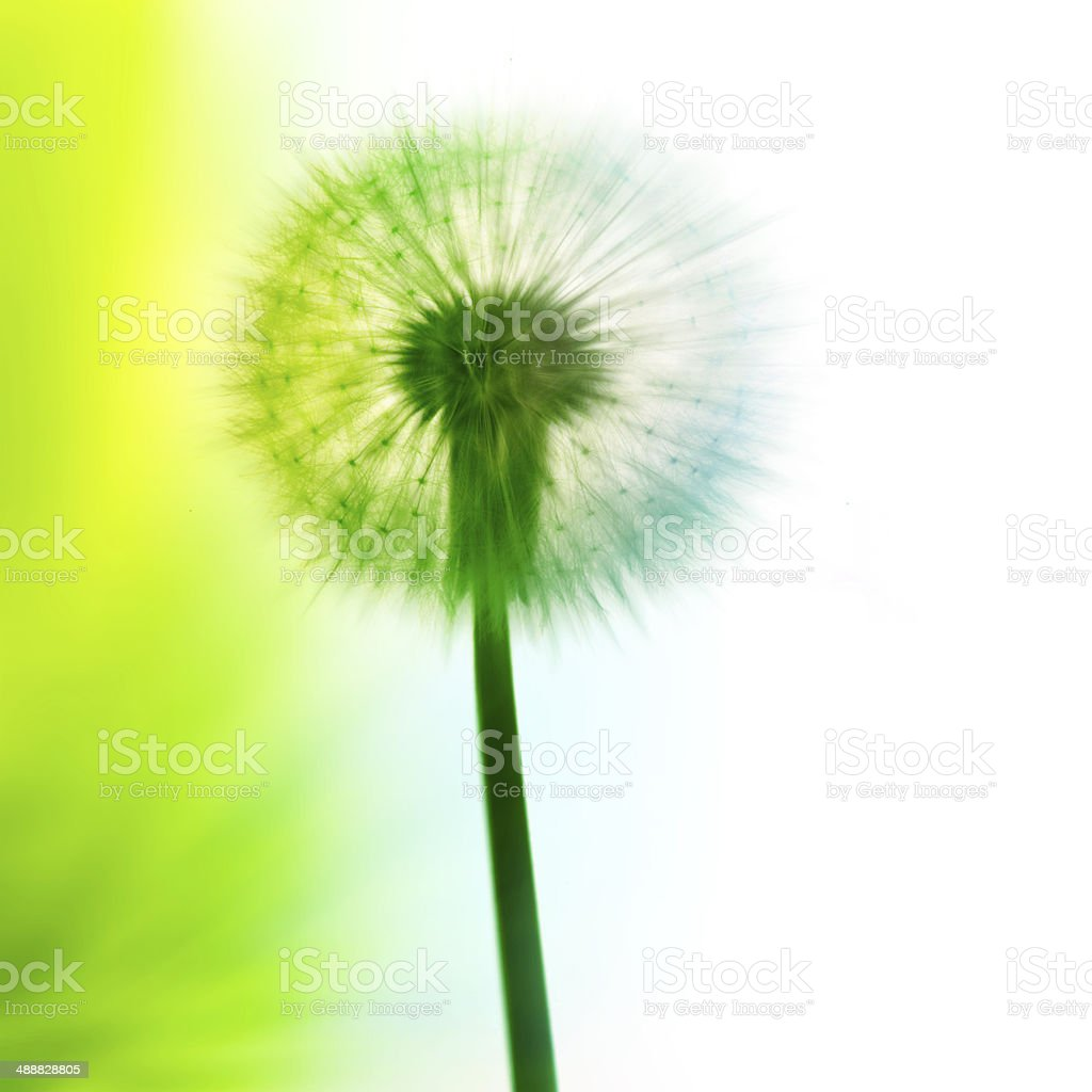 Abstract Dandelion Seed royalty-free stock photo