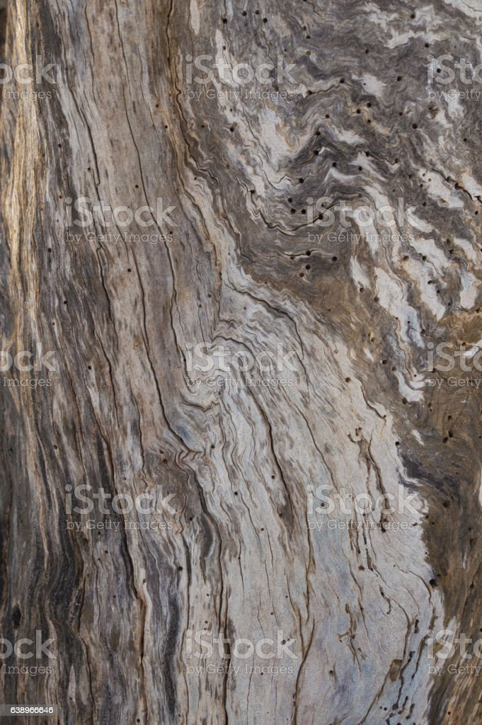 Abstract dead apple tree trunk bark swirl background stock photo