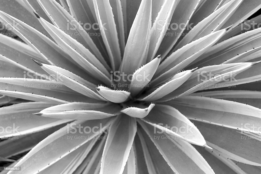 Abstract Egyptian Plant stock photo