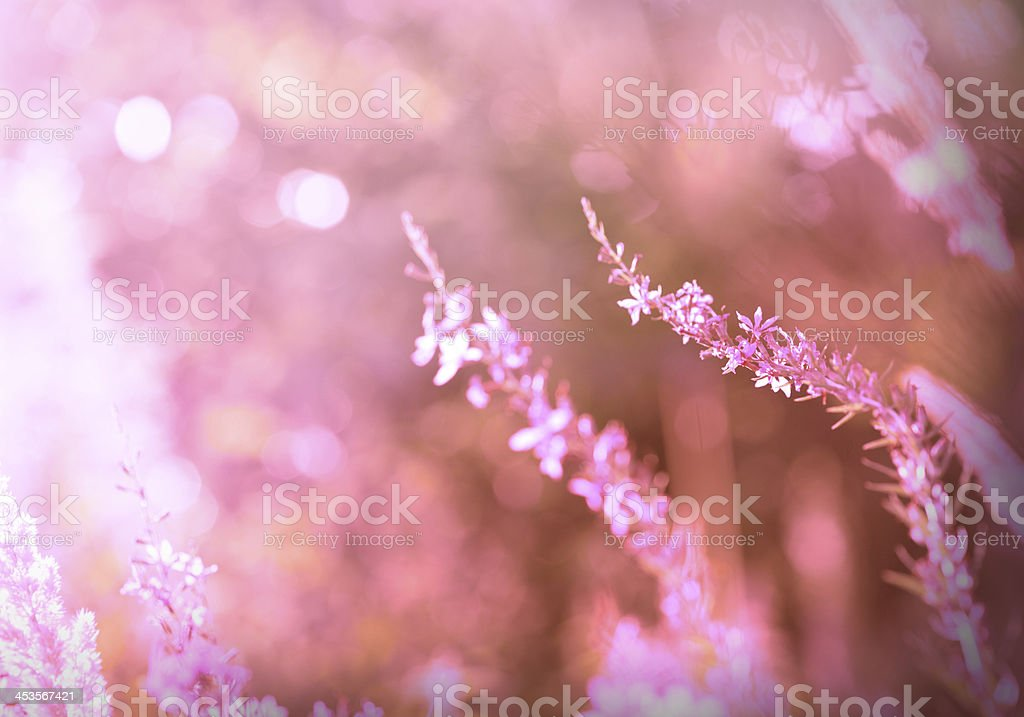 Abstract field with sunlight royalty-free stock photo