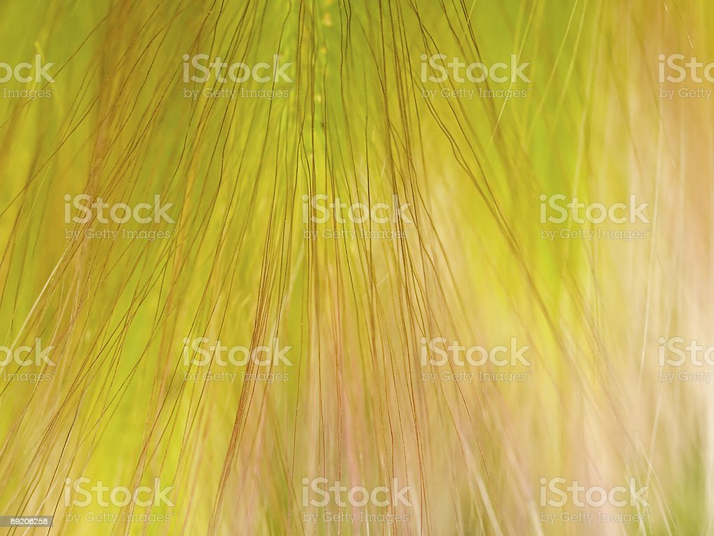 abstract floral grass textured background royalty-free stock photo