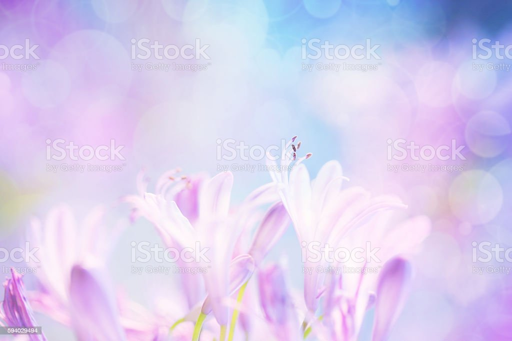 Abstract Floral with defocused background stock photo