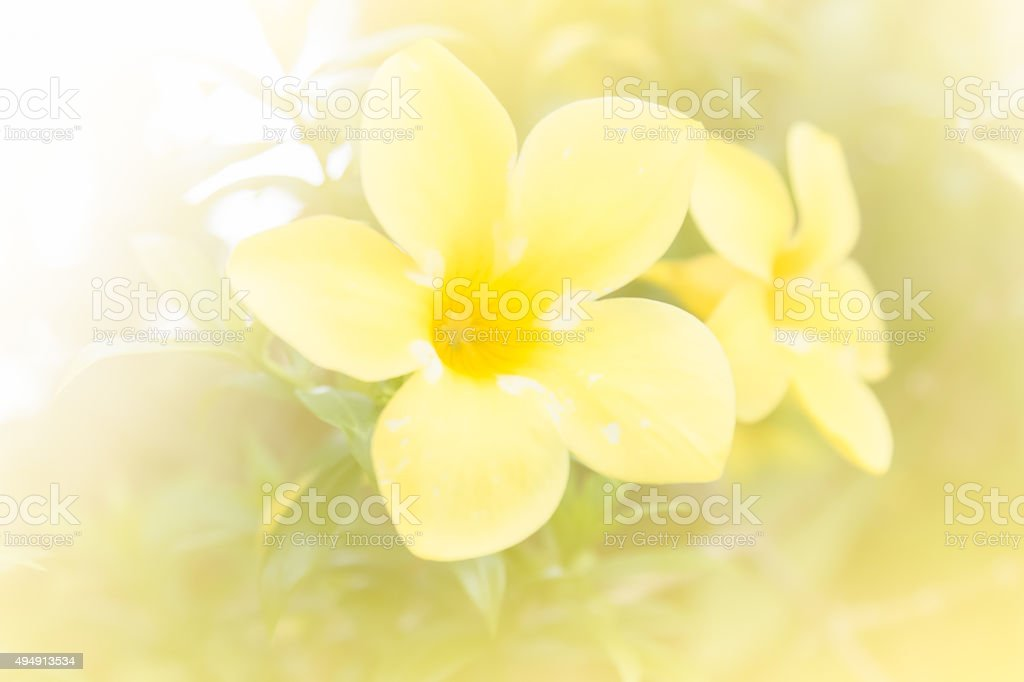 abstract flower background. made with color filters in soft colo stock photo
