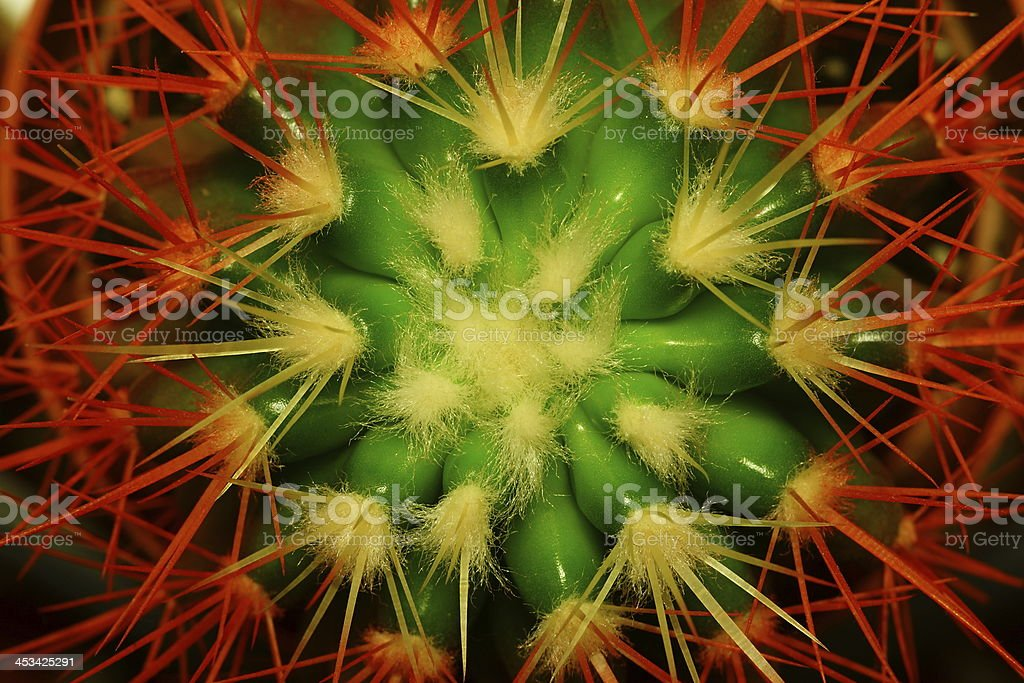 Abstract flower of a cactus royalty-free stock photo