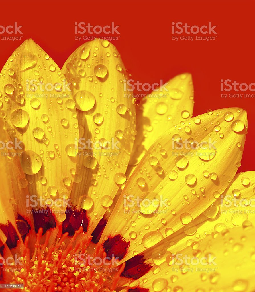 Abstract flower petals stock photo