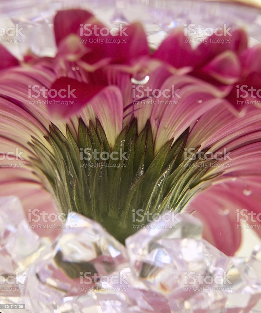 Abstract flower royalty-free stock photo
