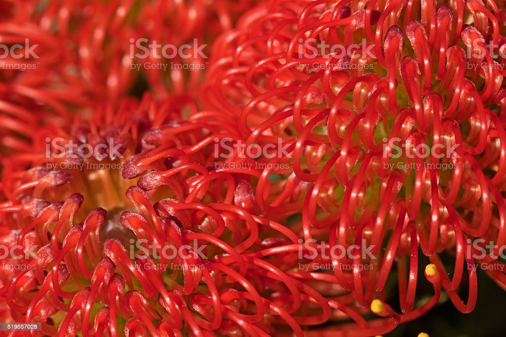 Abstract flower stock photo