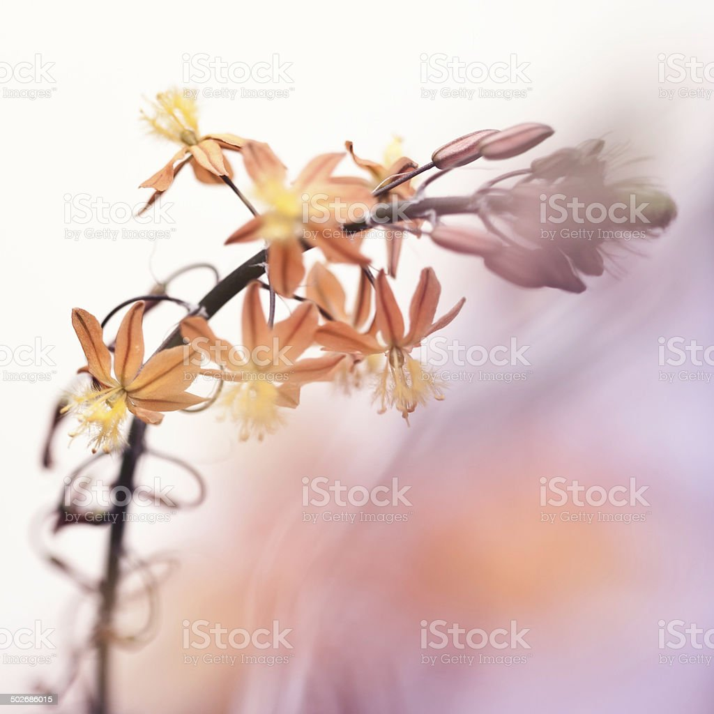 Abstract Flowers royalty-free stock photo