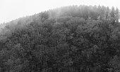 Abstract foggy dark forest background,monochrome