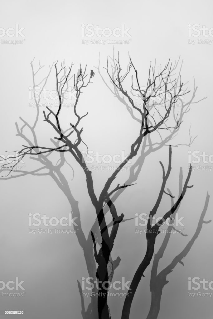 Abstract forest in the morning stock photo