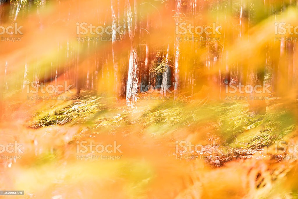 abstract forest with fern in fall - shallow DOF stock photo
