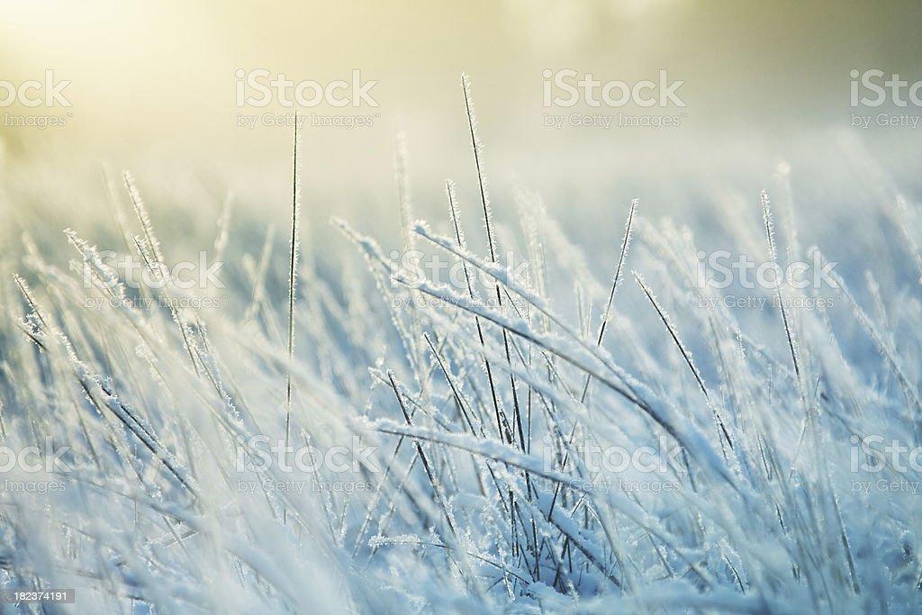 Abstract frozen grass stock photo