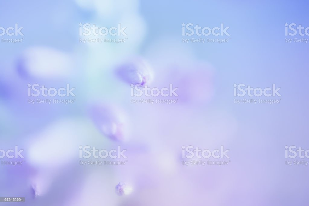 Abstract Gentle Blue Floral Background stock photo
