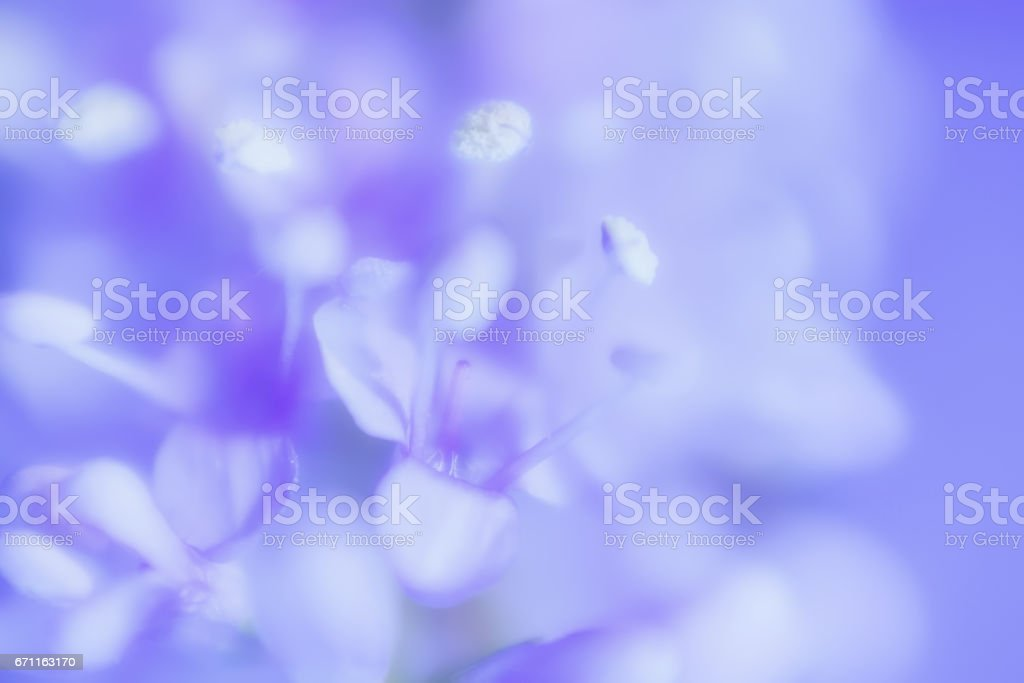 Abstract Gentle Lilac Floral Background stock photo