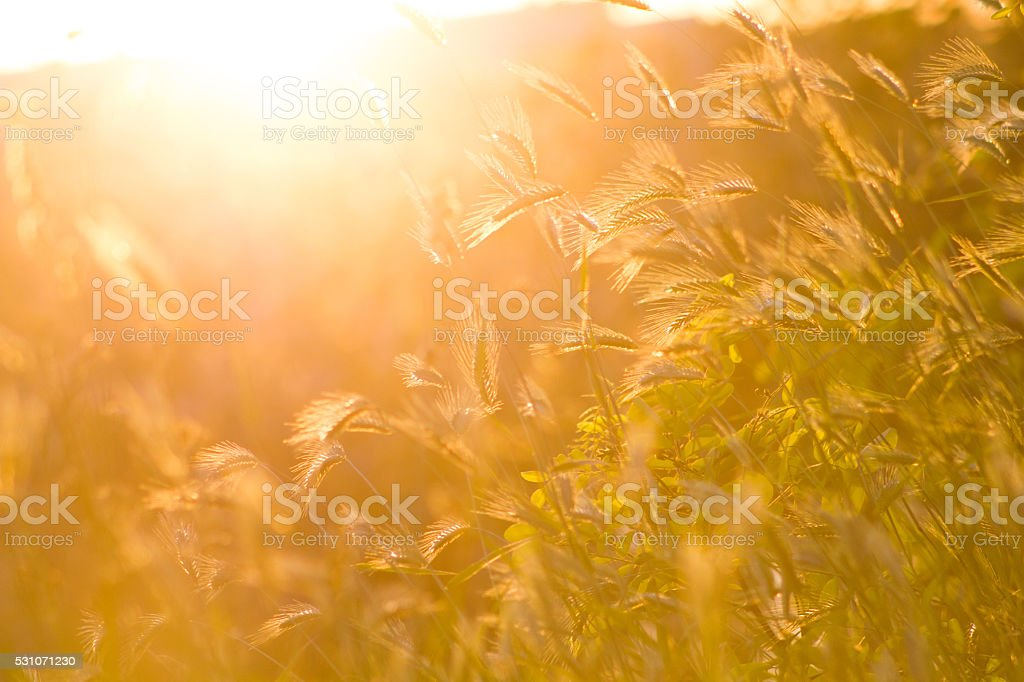 Abstract grass summer or spring background stock photo