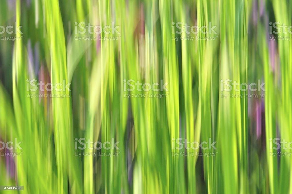 Tło zielone tło zbiór zdjęć royalty-free