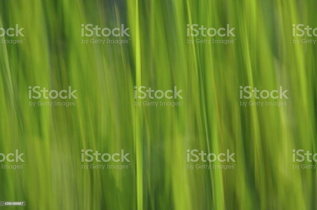Tło zielony niewyraźne tło zbiór zdjęć royalty-free
