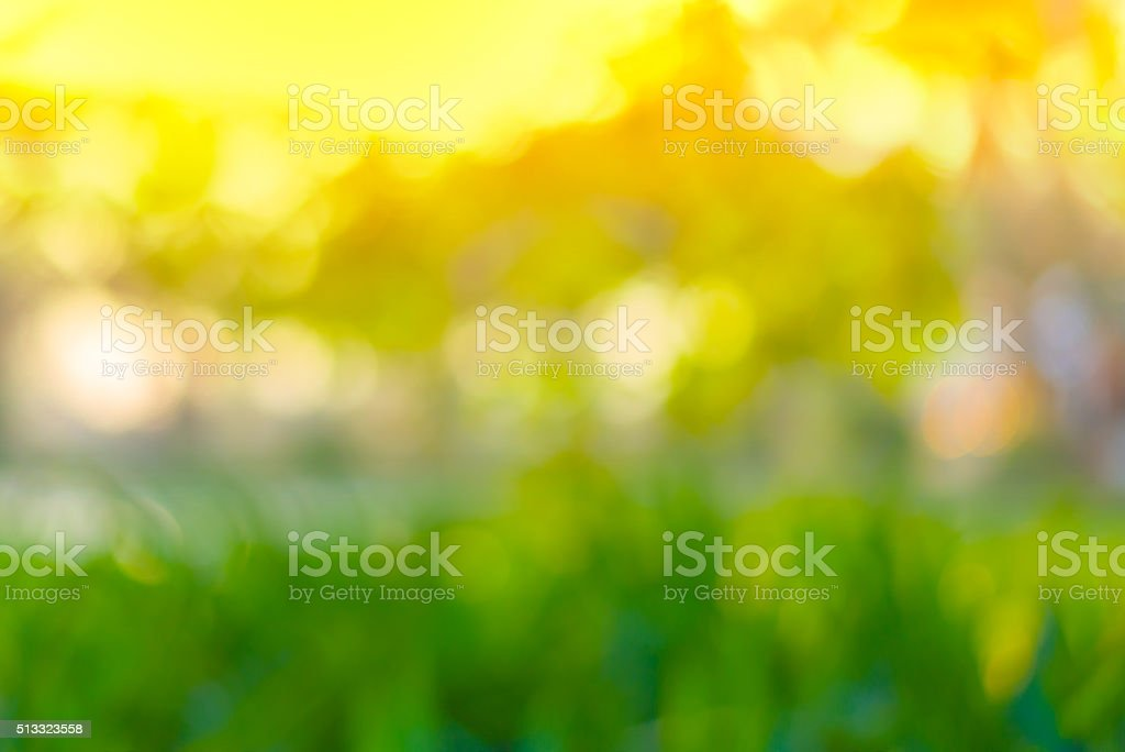 Abstract Green bokeh from tree and sunset color background stock photo
