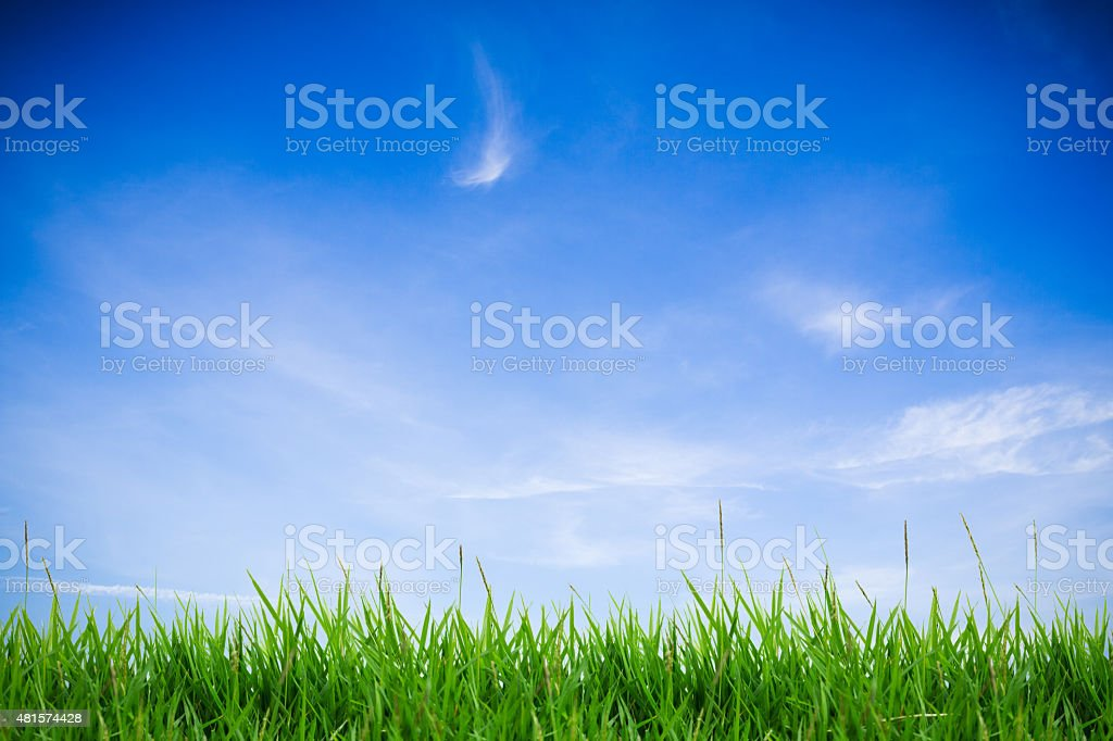 abstract green grass on clound sky stock photo
