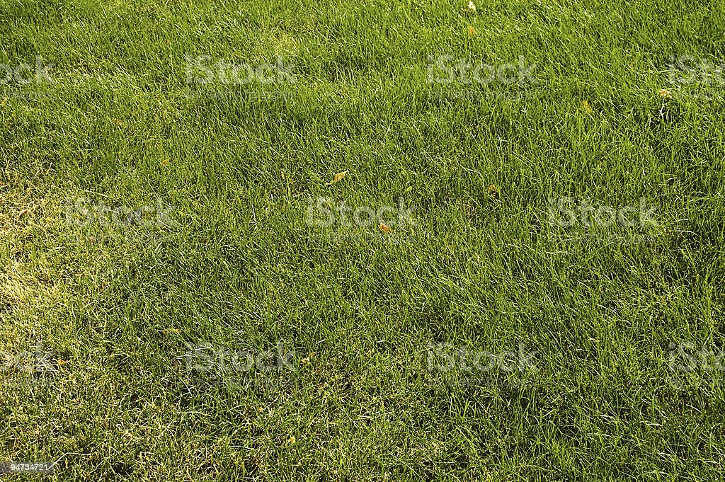 abstract green grass royalty-free stock photo