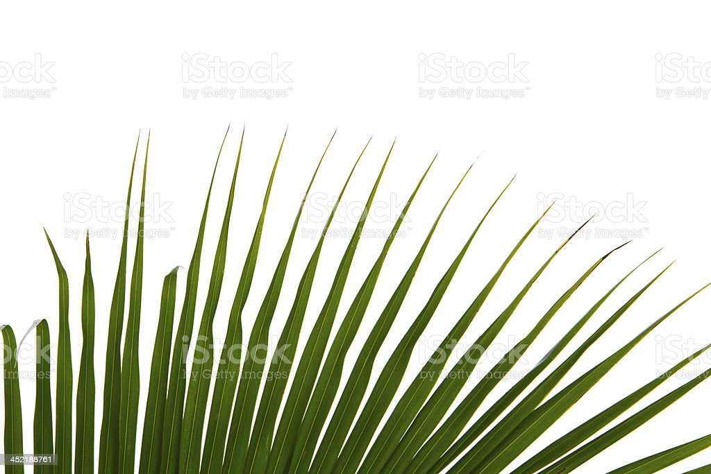 Abstract green leaves background royalty-free stock photo