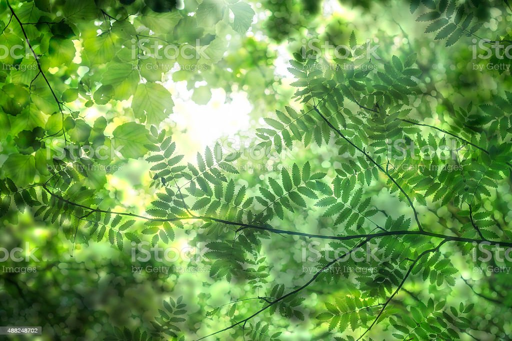 abstract green nature stock photo