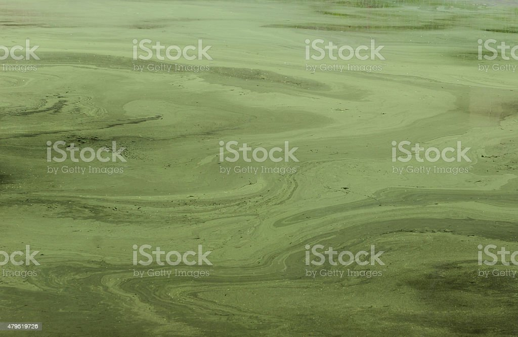 abstract green spawn on water stock photo