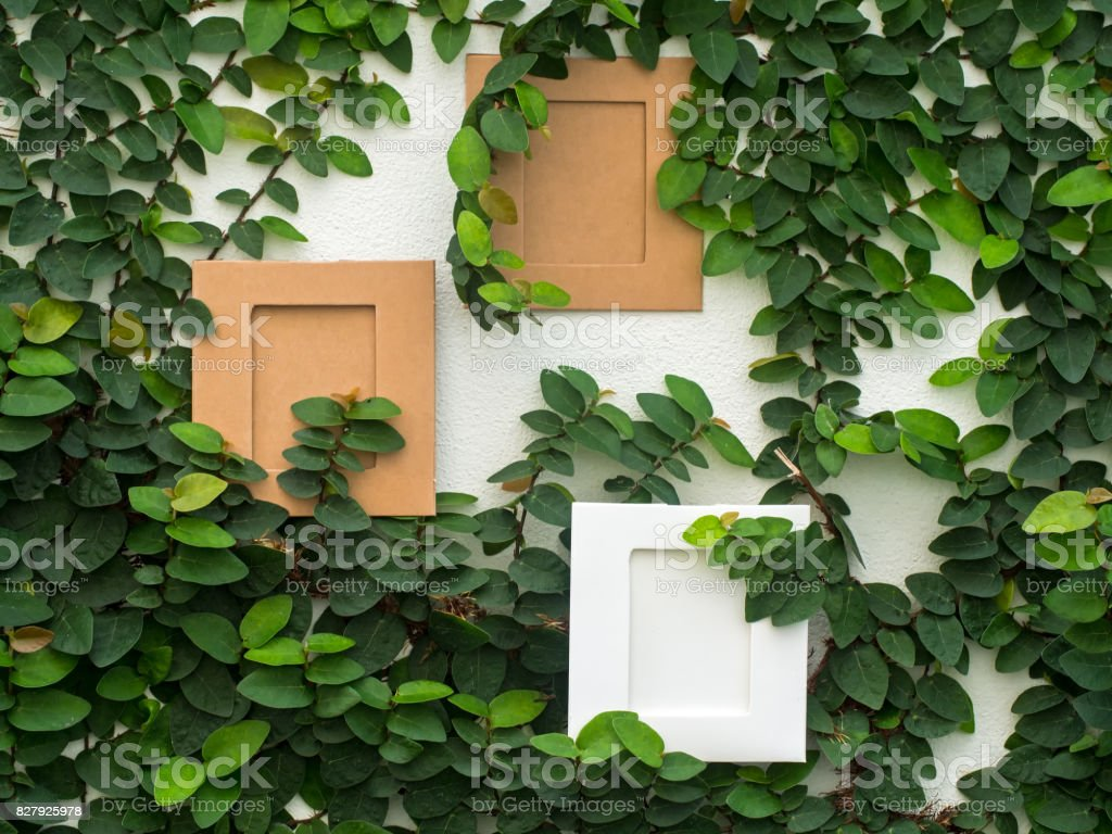Abstract green wall with the frame on the white background of ivy gourd for background stock photo