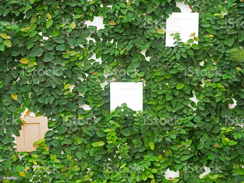 Abstract green wall with the frame stock photo