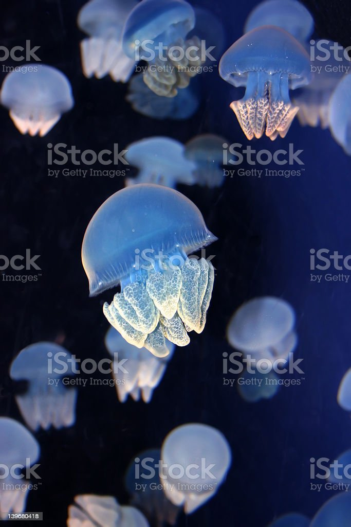 Abstract Jellyfish royalty-free stock photo