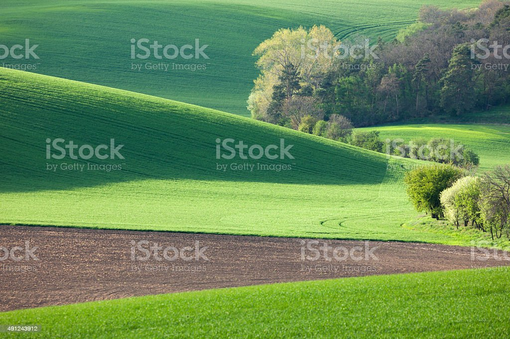 Abstract landscape of Sunny hills with green fields and blossom stock photo